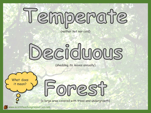 Geography - Display - Temperate Deciduous Forest definition