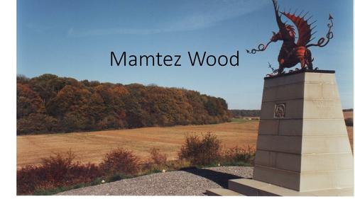 Mamtez Wood