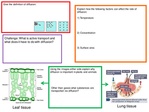 B2 choice and challenge cells and diffusion mat