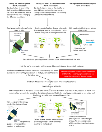 Testing Leaves for Starch - what is needed for photosythesis flow diagram