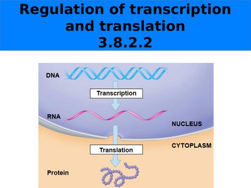 Regulation of transcription and translation_AQA_7402_Yr13
