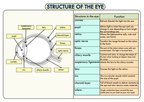 Colour Poster on the Structure of the Eye by beckystoke - Teaching ...