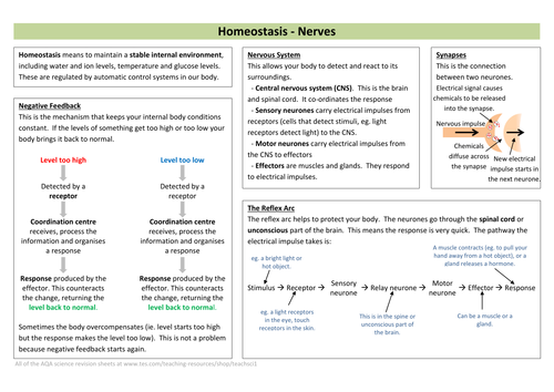 Homeostasis (Nerves & Hormones) Revision Sheet (new AQA)