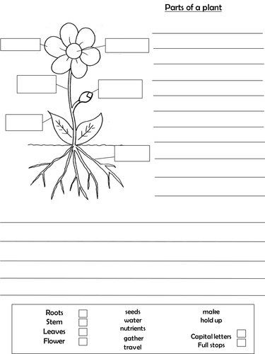 Ks1 Differentiated Parts Of A Plant Worksheets By