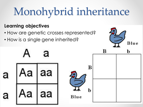 AQA A-level Biology (2016 spec). Section 7 Topic 17: Inherited changes 2 Monohybrid inheritance