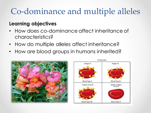 AQA A-level Biology (2016 spec). Section 7 Topic 17: Inherited changes 5 Co-dominance & multiple