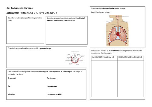 igcse biology gas exchange in humans revision poster by teaching resources tes. Black Bedroom Furniture Sets. Home Design Ideas