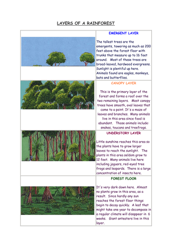 sen worksheet layers of the rainforest with notes by teachmomo teaching resources tes. Black Bedroom Furniture Sets. Home Design Ideas