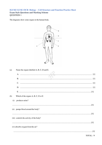IGCSE/ GCSE /OCR  Biology – Cell Structure and Function Practice Sheet