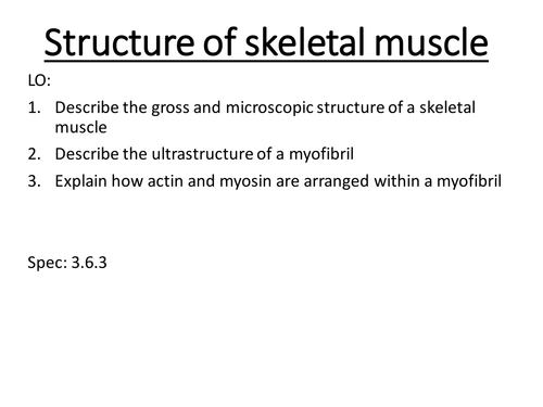 Alevel biology Topic 6 structure and contraction of skeletal muscle