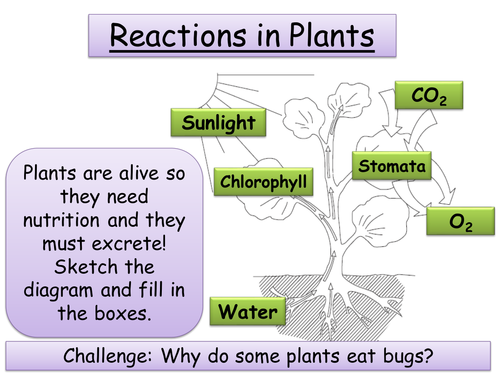 Year 9 Biology - Photosynthesis, Leaf adaptations, Transport & Breeding