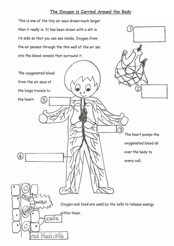 A selection of worksheets about breathing.