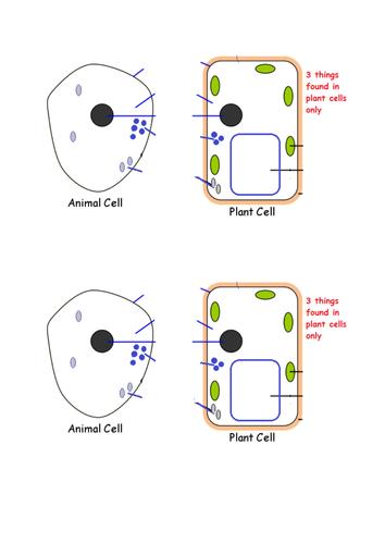 animal: Plant And Animal Cell Diagram Gcse