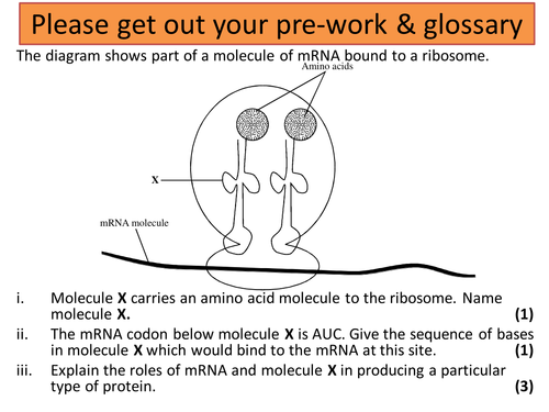 AQA A-level Biology (2016 specification). Section 8 Topic 21 DNA technology 1 Producing fragments