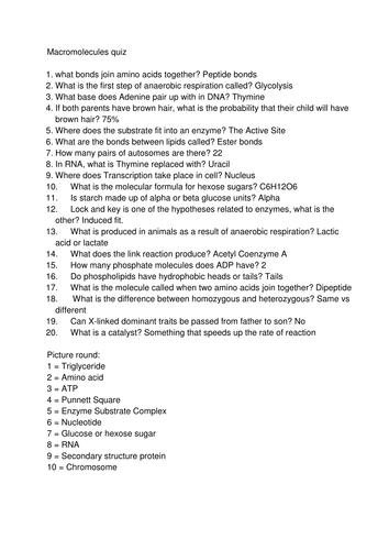 Level 3 Macromolecules end of unit quiz