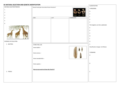 9-1 GCSE Combined Science Edexcel Revision sheet for B1 Topic 4 Natural Selection and GM