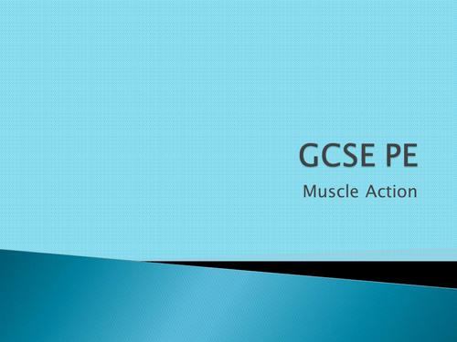 AQA GCSE PE 2016 - Lesson 15 Muscle Actions