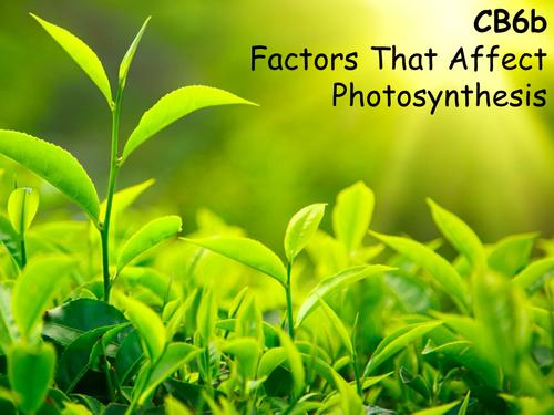Edexcel CB6b Factors That Affect Photosynthesis
