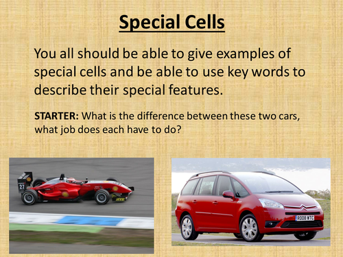 Special cells and cell models