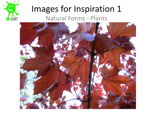 Art. Natural forms images for inspiration