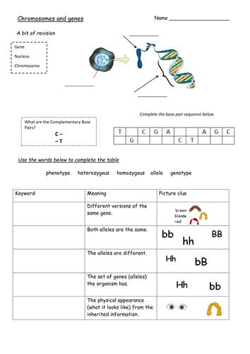 KS4 Biology Punnett Squares Booklet