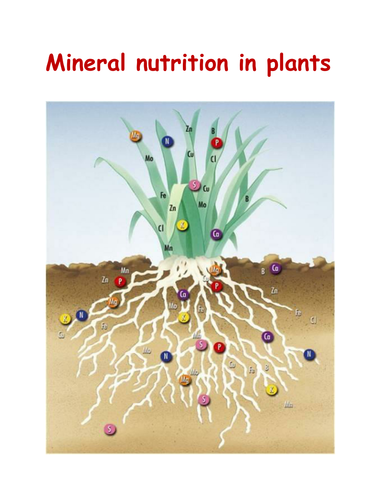 Mineral Nutrition In Plants By Adlenesangeeth Teaching Resources Tes