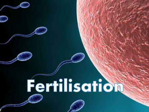 Internal and External Fertilisation