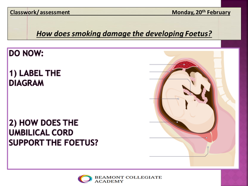 The effect of smoking on the foetus