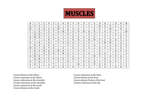 Muscles word searches
