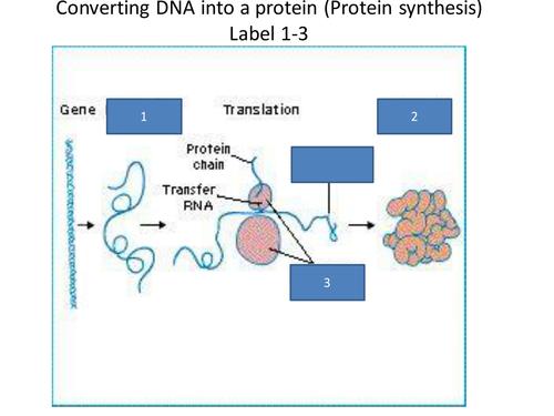 9-1 AQA Biology Unit B13 L4 Mutations