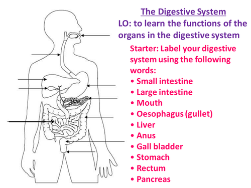 New aqa gcse biology digestive system by biologyrk teaching new aqa gcse biology digestive system by biologyrk teaching resources tes ccuart Gallery