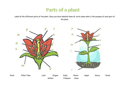 Label Parts of Plant Worksheet by mousemat007 Teaching Resources – Plant Worksheet