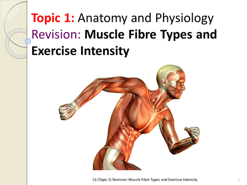EDEXCEL AS PE (New Spec 2016) Muscle Fibre Types and Exercise ...