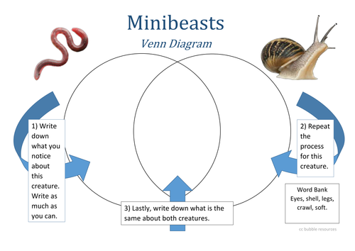 Minibeast venn diagram 2 by bubbleresources teaching resources tes minibeast venn diagram 4 ccuart Images
