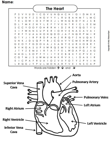 DIGESTIVE SYSTEM WORD SEARCH ANSWERS  Auto Electrical