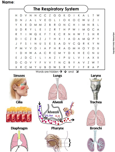 Respiratory system word search by sciencespot teaching resources tes ccuart Image collections