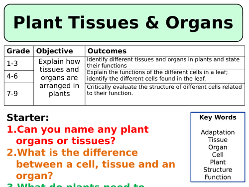 NEW AQA Trilogy (2016) Biology - Plant tissues & organs