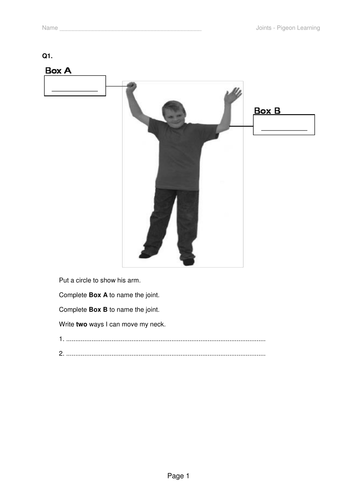 Joints work sheet to differentiate for SEN students
