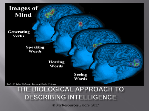 The Biological Approach to Describing Intelligence