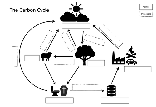 Carbon Cycle Card Sort by jenbrewer Teaching Resources Tes – Carbon Cycle Worksheet