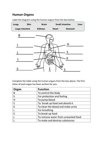 Human organs worksheet SEN