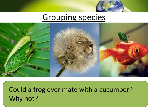 KS3 Biology Classification - Grouping species