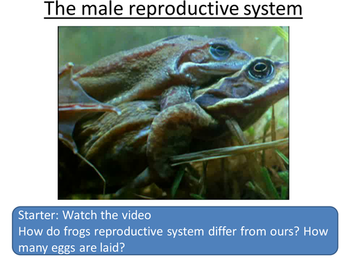 KS3 Reproduction Lesson 1/15 Male Reproductive System