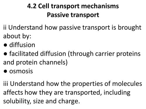 A level Biology Edexcel B 4.2 passive transport