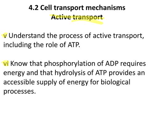 A level Biology Edexcel B 4.2