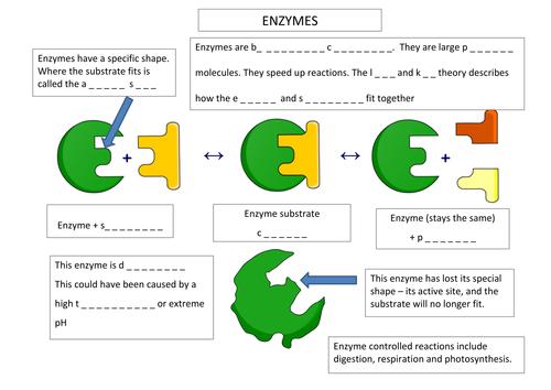 Enzyme Annotation Worksheet