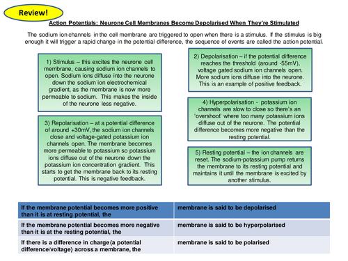 Action Potential Card Sort Revision Card/Activity New OCR A Level