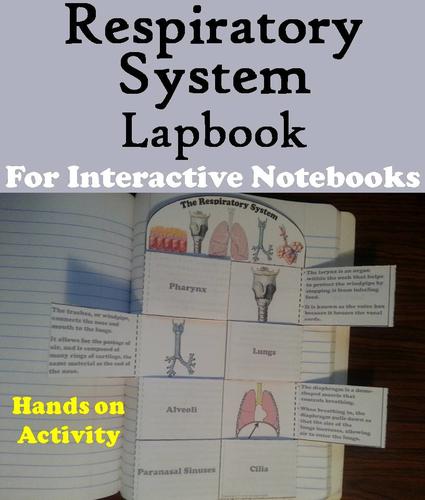 Respiratory System Lapbook