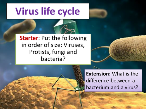 Virus Lifecycle