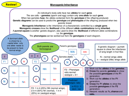 Monogenic Inheritance Revision Card Activity New OCR A Level